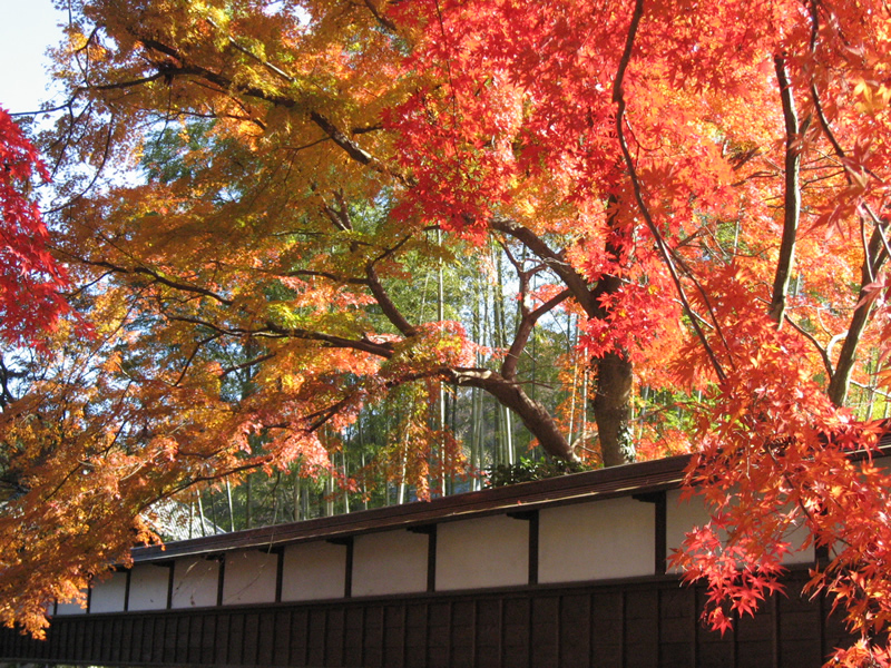 玉澤妙法華寺の秋